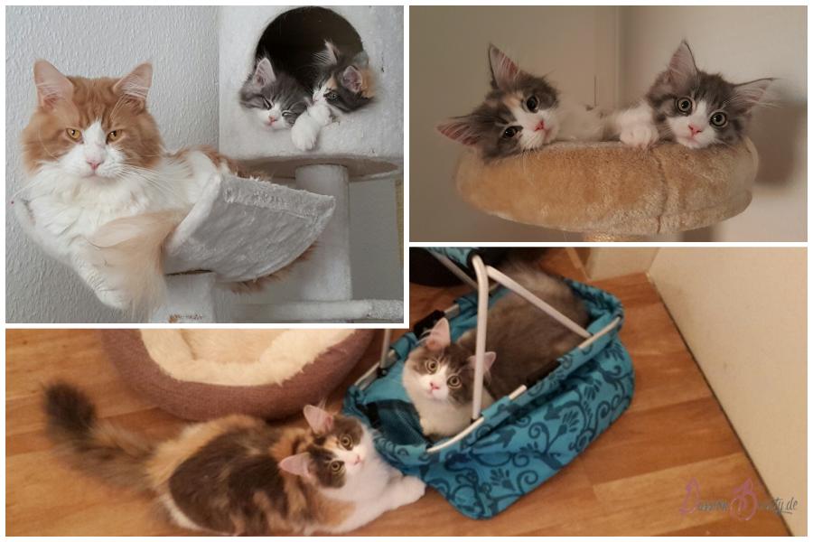 """Alles für die Katz – Was man beachten sollte, wenn man sich """"eine"""" Katze anschaffen möchte"""