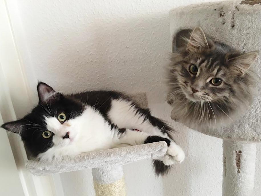 Rund um die Katze – Hilfsmittel gegen Zecken!