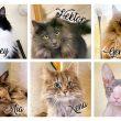 Die Chaosbande stellt sich vor – Unsere sechs Katzen und ihre Merkmale