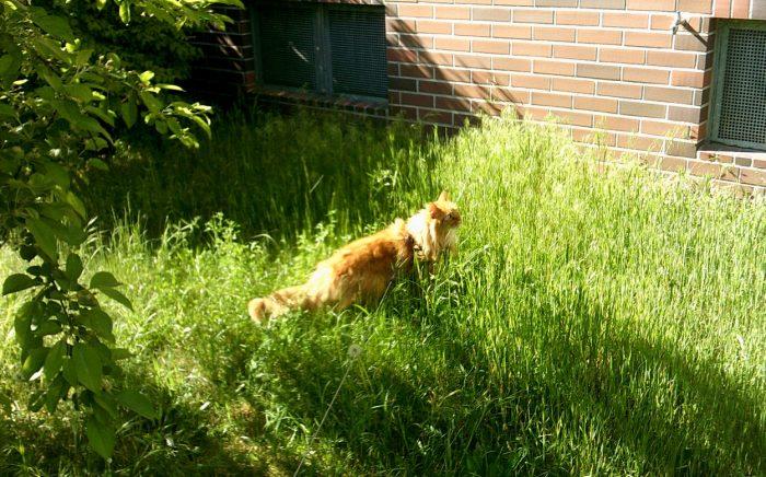 Geronimo beim spazieren im Sonnenschein.