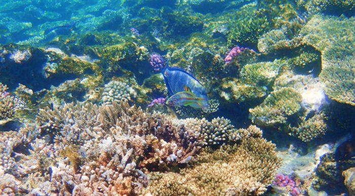 Die wundervolle Unterwasserwelt des roten Meeres.